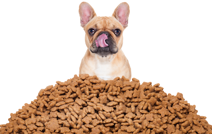 FSMA Regulations For Pet Food - Is Your Industrial Flooring Compliant?